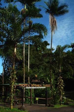 Hawaii Tropical Botanical Garden Destination Hilo